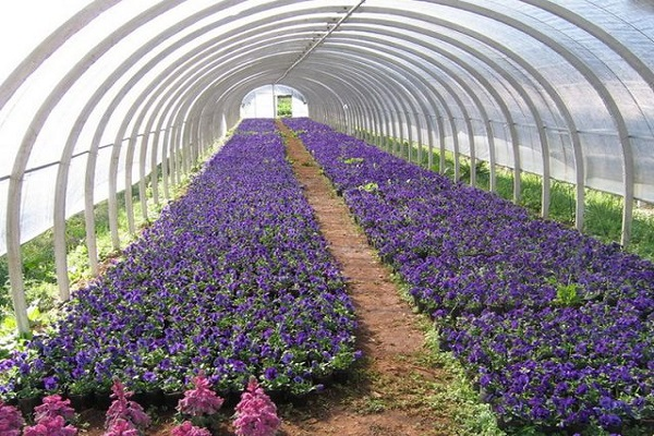 花卉是属于第几类商标,花卉商标分类
